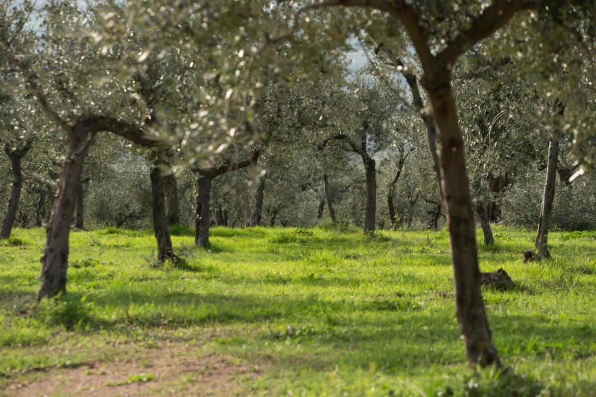 Merenda nell'Oliveta, tra il Sentiero degli Olivi e la Via di San Francesco